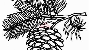 Pine Cone Coloring Page White Pine Cone Drawing Clip Art Pine Cone Clipart Panda