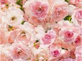 Pink Rose Wall Mural Floral Wall Mural Rosa Reference 8 937