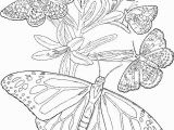 Print butterfly Coloring Pages Free Printable Adult butterfly Coloring Page