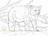 Printable Bear Coloring Pages Realistic American Black Bear Coloring Page