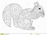 Printable Coloring Pages Of Squirrels Squirrel with Nut Coloring Raster for Adults Stock Illustration
