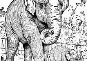 Printable Elephant Coloring Pages Elephant Coloring Pages for Adults New Elephant Coloring Page Fresh