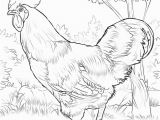 Printable Rooster Coloring Pages Rhode island Red Rooster Coloring Page
