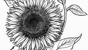 Printable Sunflower Coloring Page Blooming Sunflower Coloring Page From Sunflower Category