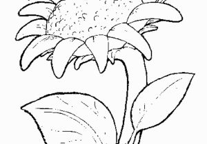 Printable Sunflower Coloring Page ПодсоРнух Razukrashki