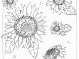 Printable Sunflower Coloring Page Kansas Day Freensunflower Coloring Page From Michaelsmakers