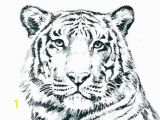 Printable Tiger Coloring Pages Unique Tiger Coloring In Pages – Gotoplus