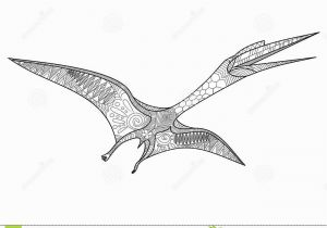 Pterosaur Coloring Pages Pterosaur Coloring Book for Adults Vector Stock Vector