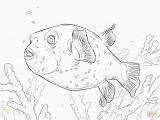 Puffer Fish Coloring Page Puffer Fish Coloring Page Awesome Puffer Fish Coloring Pages