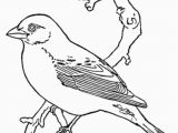 Purple Finch Coloring Page Bird Coloring Pages Coloring Kids Coloring Pinterest
