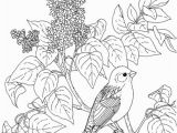 Purple Finch Coloring Page New Hampshire Purple Finch and Purple Lilac Coloring Page