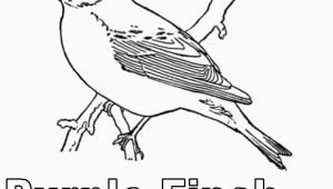 Purple Finch Coloring Page Purple Finch Coloring Page