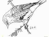 Purple Finch Coloring Page Purple Finch Coloring Page Pages 3