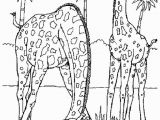 Realistic Animal Coloring Pages 18fresh Realistic Animal Coloring Pages Clip Arts & Coloring Pages