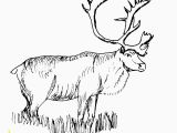 Realistic Animal Coloring Pages to Print Free Realistic Animal Coloring Pages