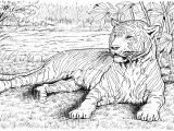 Realistic Animal Coloring Pages to Print Free Tiger Coloring Pages