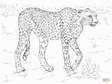 Realistic Animal Coloring Pages to Print Printable Realistic Animal Coloring Pages at Getcolorings