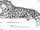 Realistic Animal Coloring Pages to Print Realistic Jaguar Animal Coloring Pages