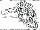 Realistic Animal Coloring Pages to Print Realistic Wild Animal Coloring Pages at Getcolorings
