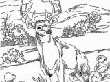 Realistic Animal Coloring Pages to Print Realistic Wild Animal Coloring Pages at Getdrawings