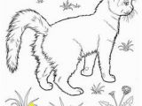 Realistic Cat Coloring Pages Cat Color Pages Printable