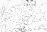Realistic Cat Coloring Pages Printable Cat Coloring Pages Realistic