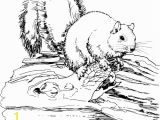 Realistic Coloring Pages Of Animals Printable 48 Realistic Animal Coloring Pages 3629 Free Coloring