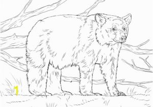Realistic Coloring Pages Of Animals Realistic American Black Bear Coloring Page