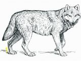 Realistic Coloring Pages Of Animals Realistic Animal Coloring Pages Coloring Pages Animals Realistic