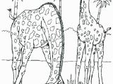 Realistic Coloring Pages Of Animals Realistic Animal Coloring Pages Realistic Animal Coloring Pages and