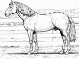 Realistic Coloring Pages Of Animals Realistic Coloring Pages Animals 3 2453