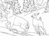 Realistic Coloring Pages Of Animals Realistic Coloring Pages Animals