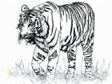 Realistic Coloring Pages Of Animals Realistic Lion Coloring Pages Animals Cat Free Printable for Kids
