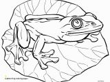 Realistic Coloring Pages Realistic Frog Coloring Pages Frog Coloring Pages Fresh Frog