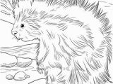 Realistic Lion Coloring Pages Cute north American Porcupine Coloring Page