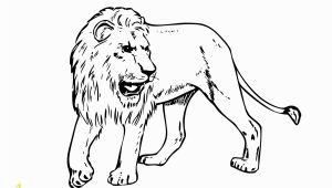 Realistic Lion Coloring Pages Lion Free Pritout