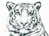 Realistic Lion Coloring Pages Wild Cat Coloring Pages G4674 Realistic Cat Coloring Pages
