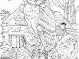 Realistic Owl Coloring Pages 104 Best for My Sister and I Images On Pinterest