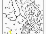 Realistic Owl Coloring Pages 276 Best Coloring Images On Pinterest