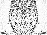 Realistic Owl Coloring Pages Diceowl Free Printable Adult Coloring Pages