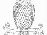 Realistic Owl Coloring Pages Flora and Fauna Coloring Sheets — Short Leg Studio