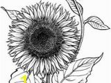 Realistic Sunflower Coloring Page 30 Best Flower Coloring Pages Images