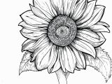 Realistic Sunflower Coloring Page Color Pages at Sunflower Coloring Pages Printable for