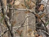Realtree Camo Wall Murals Camouflage Background Wallpaper Wallpapersafari