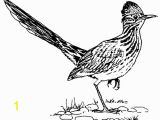 Road Runner Coloring Page Texas Symbols