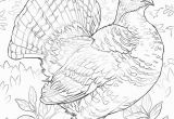 Ruffed Grouse Coloring Page Awesome Free Printable Coloring Page Best Blank Coloring Pages Free