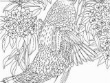 Ruffed Grouse Coloring Page Pennsylvania Ruffed Grouse Coloring Page Purple Kitty