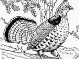 Ruffed Grouse Coloring Page Ruffed Grouse Pg 198 Birds Pinterest