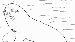 Sea Lion Coloring Page Galapogas island Colouring Sheets Google Search