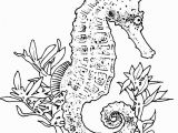 Seahorse Coloring Pages for Adults Realistic Seahorse Coloring Page Seahorses Pinterest